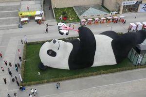 Bức tượng 'gấu trúc selfie' khổng lồ ở Trung Quốc