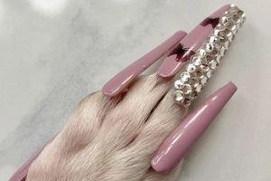 Cô gái bị dọa kiện tội ngược đãi khi làm nail cho chó cưng