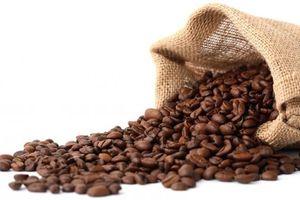 Giá cà phê hôm nay 11/4: Xuất khẩu cà phê Việt Nam giảm 34,5%; 'Lợi ích kép' nâng cao chất lượng từ khâu thu hoạch tại Đắk Lắk