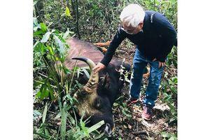 Cá thể bò tót nặng 700 kg chết trong khu bảo tồn ở Đồng Nai
