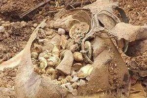 Vô tình khai quật kho báu khổng lồ trong khi cải tạo đất