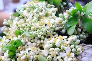 Hoa bưởi dùng đúng cách vừa lợi cho sức khỏe lại giúp da căng mịn, sáng hồng, ai cũng mê mẩn