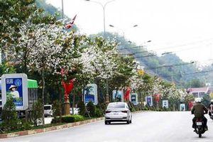 Ngỡ ngàng vẻ đẹp những tuyến đường Sơn La khi hoa ban đua nở
