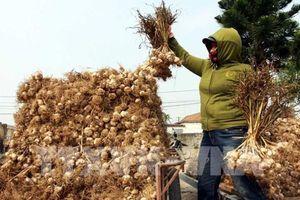 Thái Bình sẽ đẩy mạnh liên kết trong nông nghiệp