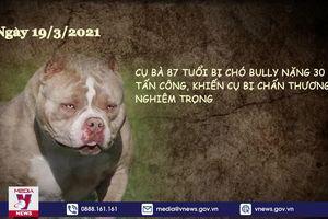 Hãi hùng chó thả rông, không rọ mõm gây nguy hiểm nơi công cộng