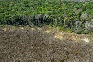 Các thương hiệu lớn tham gia thúc đẩy bảo tồn rừng trị giá 1 tỷ đô la cho Đông Nam Á