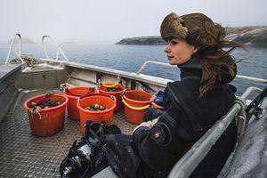 Nữ thợ lặn Thụy Điển xinh đẹp săn hàu hiếm giữa vùng biển băng