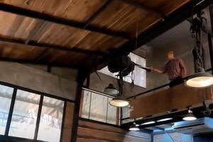 Khỉ gây náo loạn trong nhà hàng Thái Lan