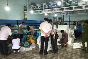 Xử phạt các cơ sở cung cấp tôm hùm giống ở Khánh Hòa
