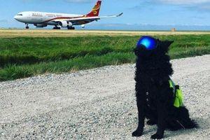 Chó xâm nhập sân bay Cam Ranh, máy bay phải bay vòng chờ hạ cánh