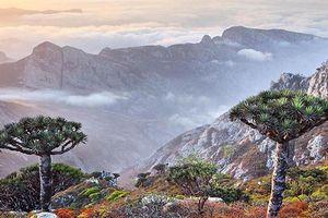 Kỳ lạ quần đảo chứa đầy loài thực vật của 'người ngoài hành tinh'