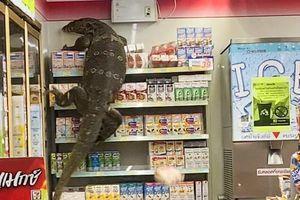 Phiên bản đời thực của đế vương bất tử Godzilla khiến con người khiếp vía