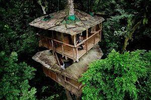Không tin nổi, 10 ngôi nhà trên cây ấn tượng khắp thế giới, ai cũng muốn bước vào sống một lần