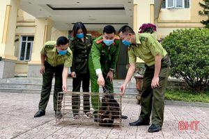 Bảo vệ động vật hoang dã từ ý thức của mỗi người dân Hà Tĩnh