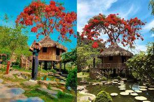 Phượng mọc giữa nhà gỗ, hồ sen nở rộ gây sốt ở 'thánh địa sống ảo' ở Ninh Bình