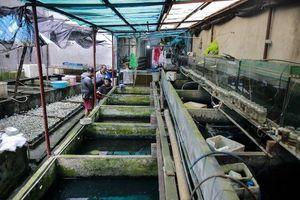 Lão nông thành triệu phú nhờ tận dụng hàng nghìn vỏ chai, phế liệu để nuôi cá