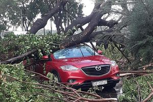 Mưa lớn, hàng loạt cây xanh tại TP HCM ngã đổ, đè người khiến giao thông ùn ứ