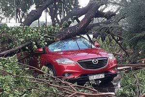 TP Hồ Chí Minh: Mưa lớn, cây đổ làm bị thương người đi đường