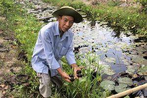 Nông dân Sóc Trăng làm giàu từ nuôi ốc Bươu