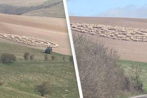 Bí ẩn hiện tượng hàng trăm con cừu đứng bất động, xếp thành hình vòng tròn như đĩa bay của người ngoài hành tinh