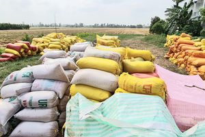 Loạn giá lúa ở miền Tây