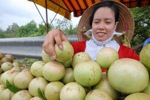 Góp ý cho sự phát triển cây ăn trái ở ĐBSCL