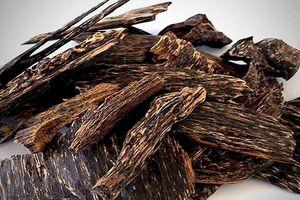 Trầm hương quý hiếm cỡ nào giá lên đến cả tỷ đồng?