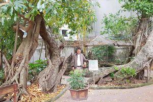Chuyện về cây di sản: Góp công, hiến đất vì cây