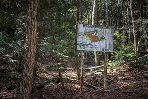 Cảnh tượng ám ảnh bên trong khu rừng tự sát ở Nhật Bản