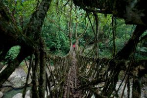 Những cây cầu ngoạn mục nhất thế giới