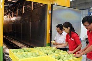 Xuất khẩu vượt 180 triệu USD, xoài Việt bán đi những thị trường nào