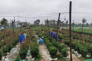 Lai Châu: Nỗ lực giảm nghèo