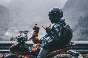 Chủ đưa chó cưng đi phượt xuyên Việt
