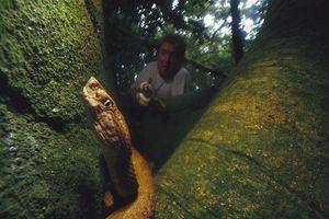 Đảo nguy hiểm nhất thế giới là 'nhà' của loài rắn cực độc nào?