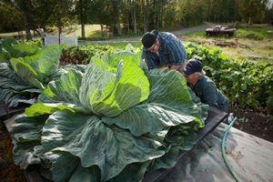Độc lạ hội chợ rau củ quả khổng lồ tại Alaska