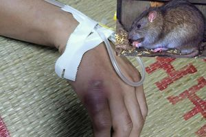 Thông tin về trường hợp nghi mắc bệnh dịch hạch ở Cao Bằng