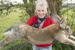 'Con thỏ lớn nhất thế giới' đã bị trộm