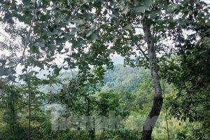 Bị cáo tố cơ quan tố tụng bỏ lọt tội phạm vụ sai phạm đất đai ở Lạng Sơn