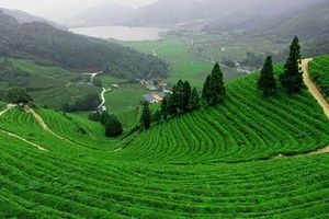 Đồi chè Tân Cương và những điểm du lịch không thể bỏ qua khi đến Thái Nguyên
