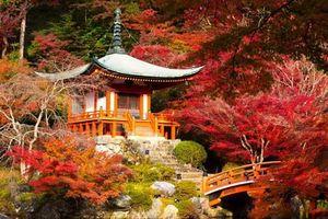 Xốn xang trước vẻ đẹp rực rỡ của mùa thu trên thế giới