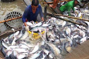 Quý I/2021: Xuất khẩu cá tra tăng 0,6% so với cùng kỳ
