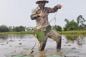 Phát triển thương hiệu 'Sen Huế' bền vững