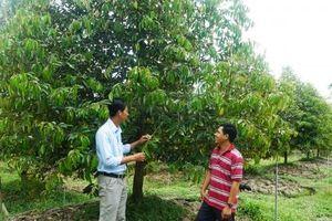 Cần bỏ kiểu 'ăn xổi' để xây dựng vườn cây ăn trái bền vững