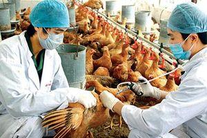 Hàng ngàn thanh niên giúp người dân phòng chống dịch bệnh gia súc