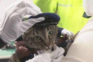 Nhật Bản: Chú mèo đặc biệt được bổ nhiệm làm 'cảnh sát trưởng'
