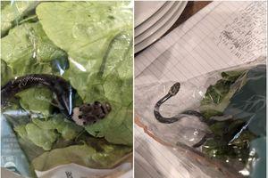 Phát hiện rắn độc bên trong túi đựng rau ở siêu thị