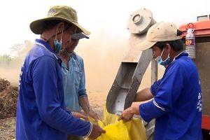 Hiệp Xương: Rau muống lấy hạt giảm năng suất, nông dân ít lợi nhuận