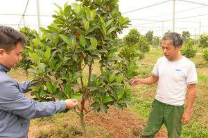 Việt Yên: Yêu cầu khôi phục nguyên trạng và trồng rau màu vào nhà lưới, nhà màng xong trước ngày 30/5