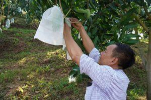 Bí quyết giúp nông dân Sơn La bán trái cây giá cao hơn gấp 2-3 lần