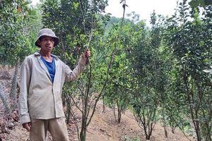 Người dân miền núi Quảng Nam khát nước sinh hoạt